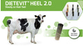 Wie Sie die Klauengesundheit Ihrer Tiere sicherstellen