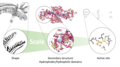 Figure 1: Multi-scale bio-inspired approach mimicking the shape and secondary structure
