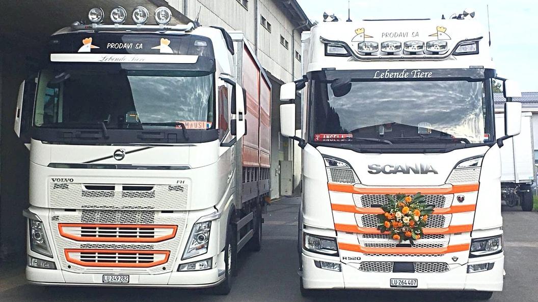 Junghennentranportfahrzeuge