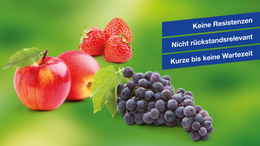 VitiSan als wichtiger Baustein zur Gesunderhaltung von Obst- und Rebkulturen.