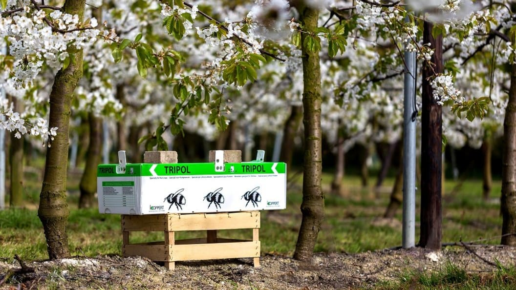 Tripol box in the orchard