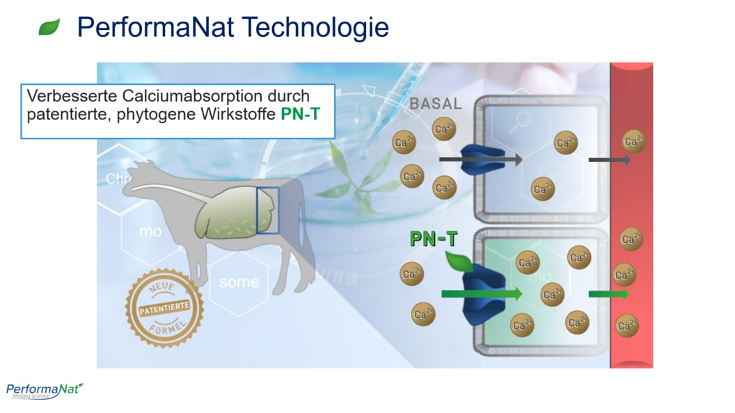 PerformaNat Technologie: Verbesserte Ca-Absorption im Pansen