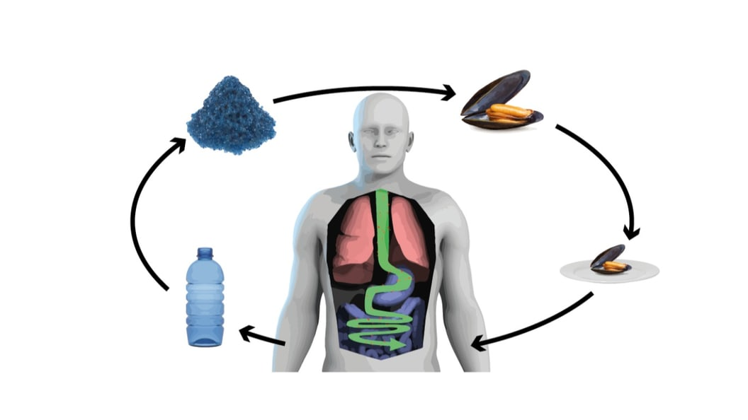 Keynote: Ist Mikroplastik schädlich für den Menschen?