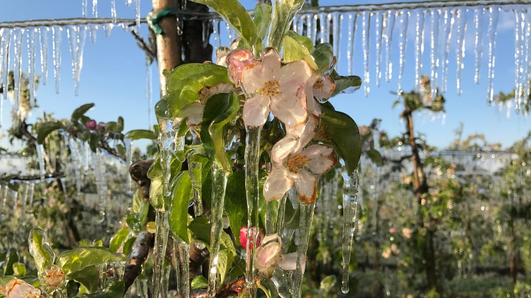 Frost irrigation for growing crops