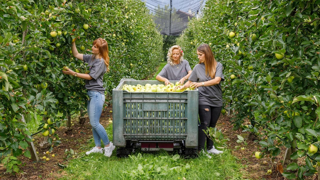 Apple harvest with the Windegger neo+