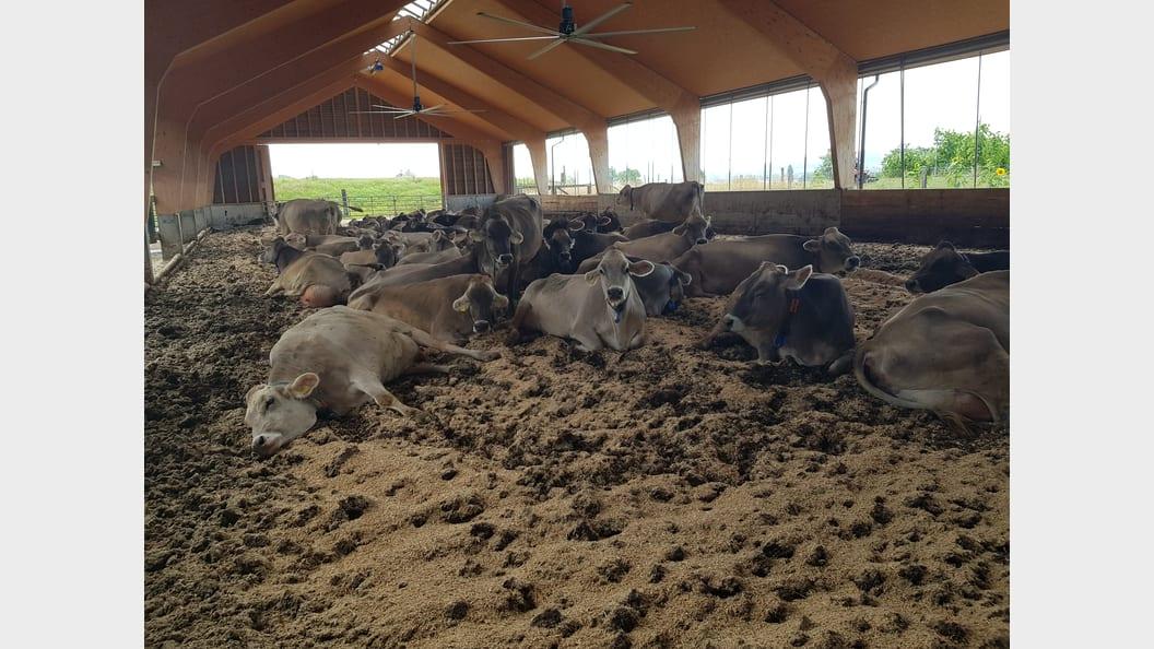Zufriedene Kühe auf dem Hof von Fam. Frei