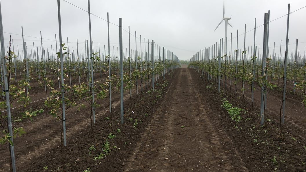 Trellex TITAN piles used in fruit growing
