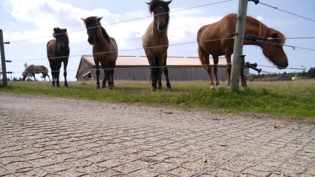 Stabiler und griffiger Boden mit Ecoraster im Bereich Pferdesport
