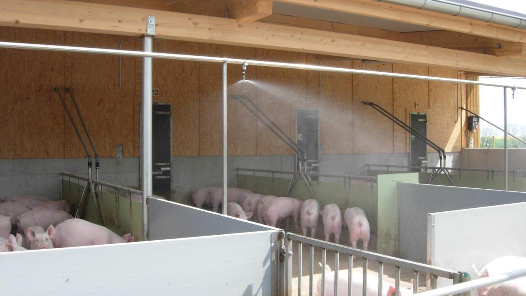 Niederdruckvernebelung im Schweineauslauf