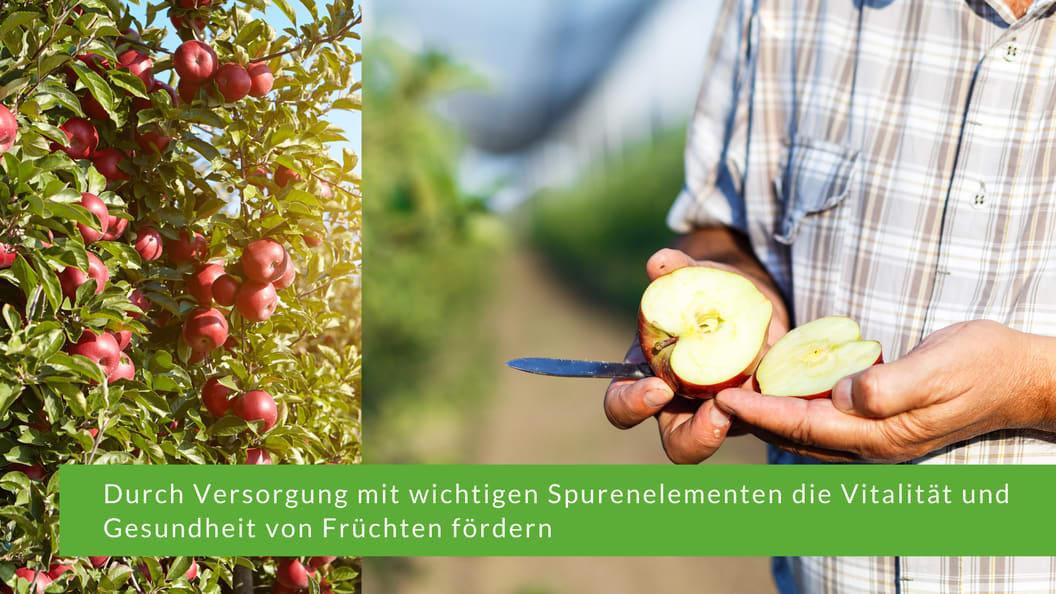 Durch Versorgung mit wichtigen Spurenelementen die Vitalität und Gesundheit von Früchten fördern