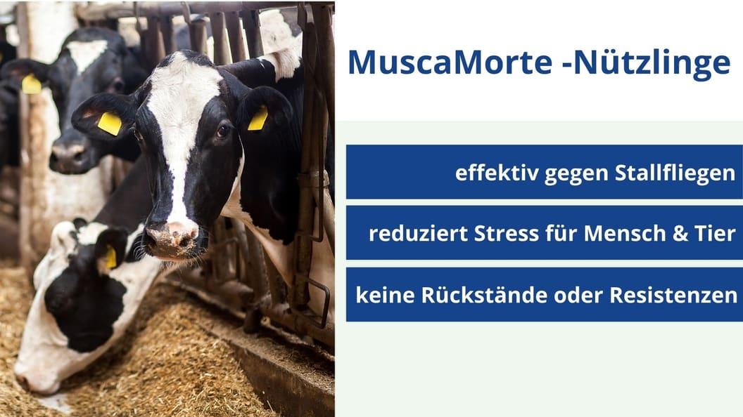 Die Vorteile von MuscaMorte-Nützlingen