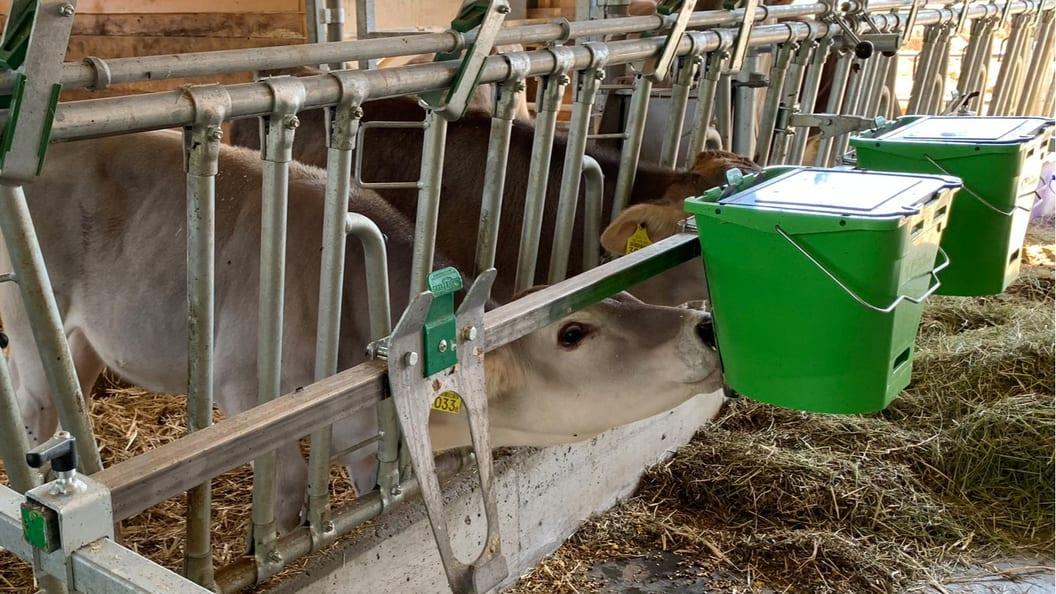 Tränkeeimer Wennemars; mit raffiniertem Nuckel ohne Rückflussventil für natürlichen Milchfluss