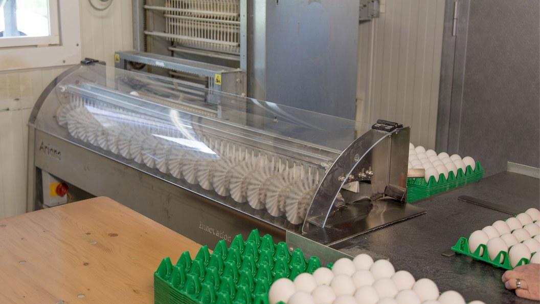 Eier-Reinigungsmaschine Ariana