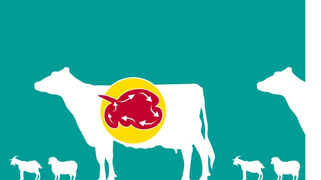 Wirtschaftlich Milch + Fleisch produzieren mit RUMINVEST.