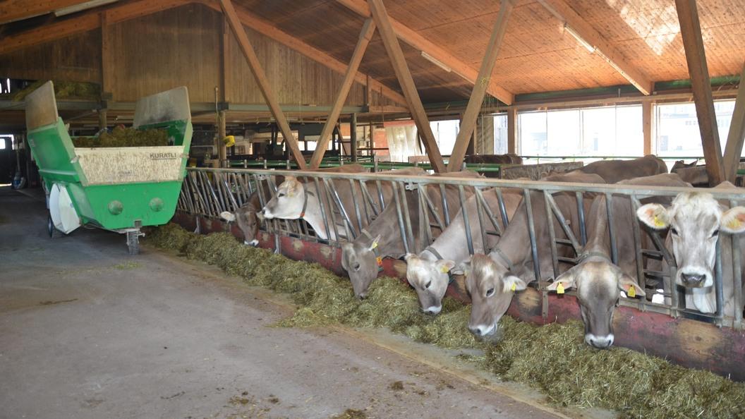 Beste Herdenleistung und Tiergesundheit dank DairyCheck365.