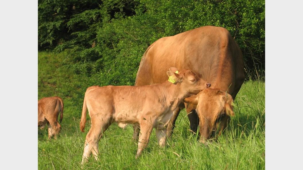 Freilandhaltung in der Herde – Mutterliebe inklusive