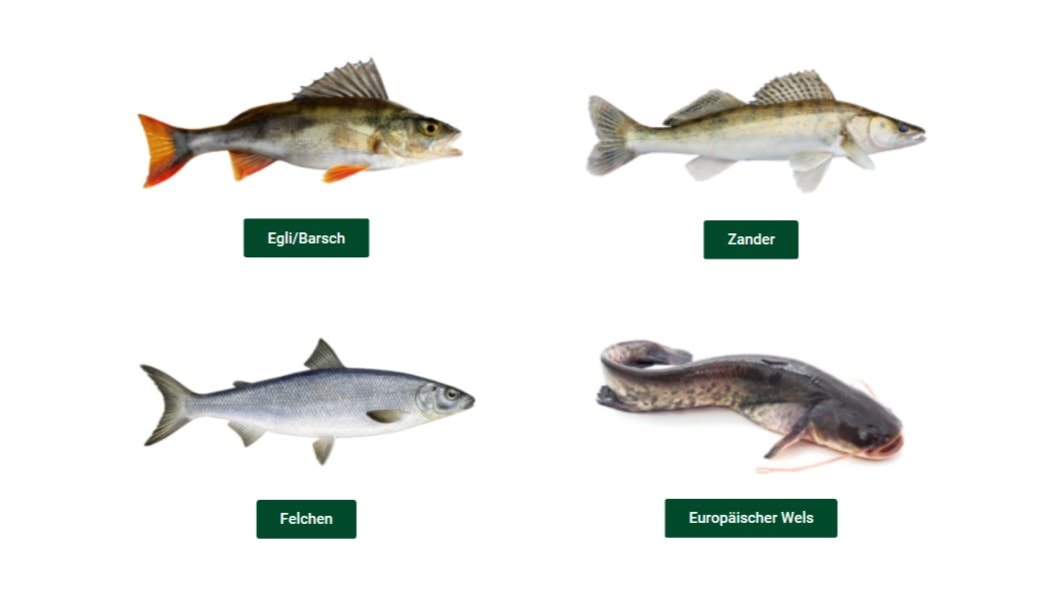 Unser Besatzfischangebot (Fischarten)