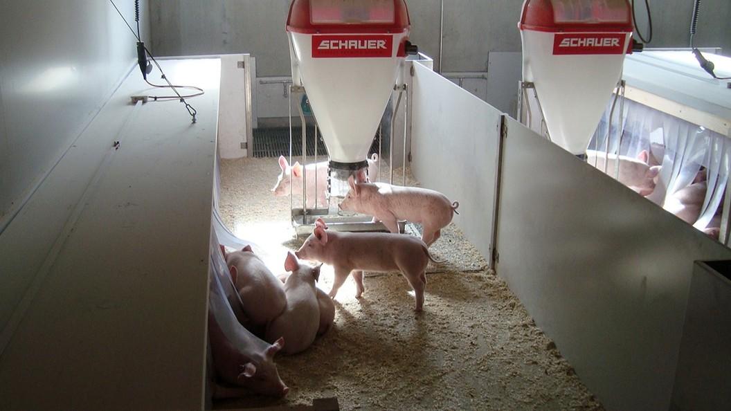 Modernes Füttern für gesunde Tiere