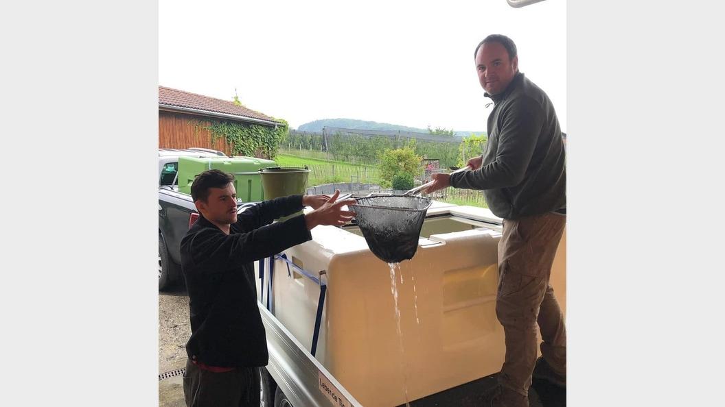 Fische umsetzen