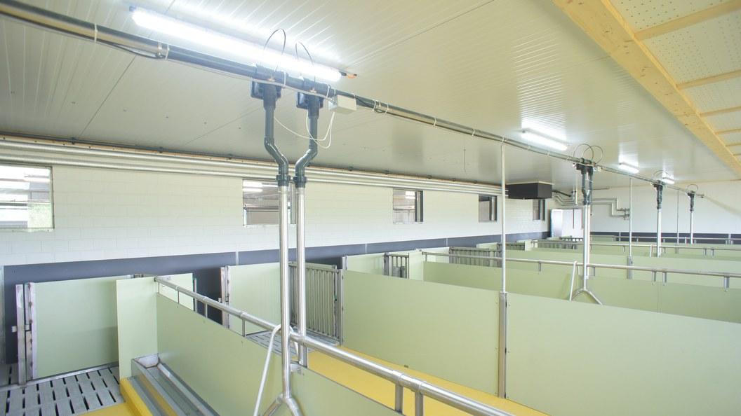 LED FRESHLIGHT wird in allen Branchen eingesetzt, wie zum Bsp, auch in Schweineställen.