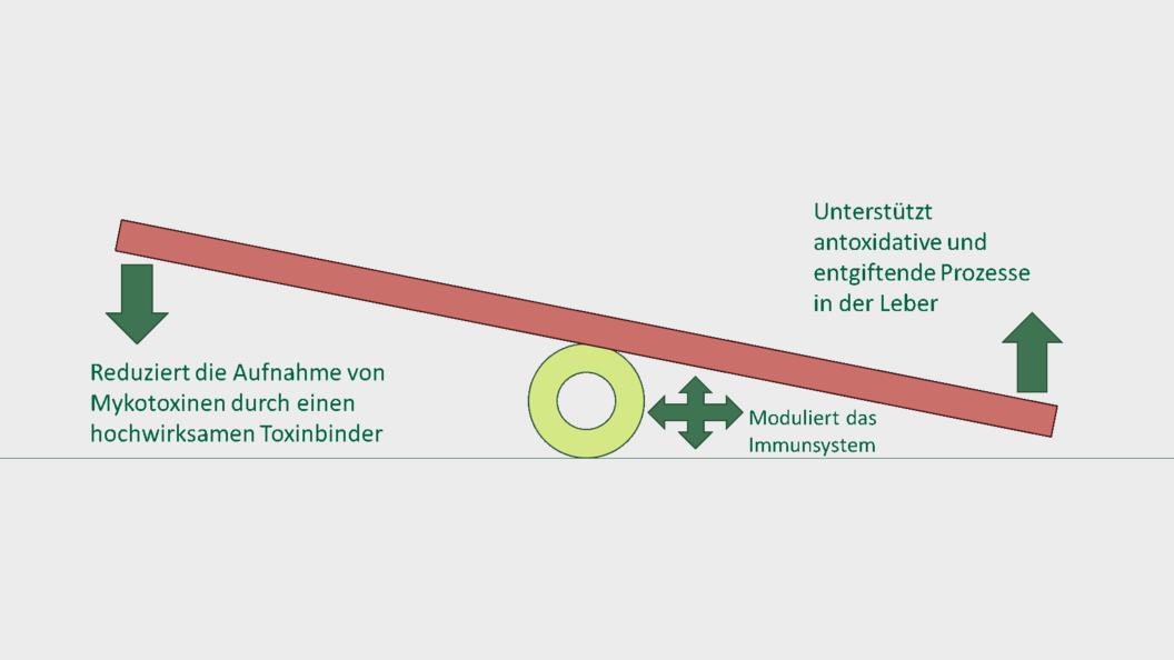 BioTox® Activ8 - die ganzheitliche Strategie, um nicht das Gleichgewicht zu verlieren