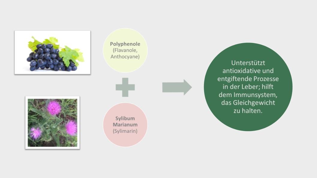 B.I.O.Tox Activ8 – hochwirksamen Mykotoxinbinder mit natürlichen Stoffen zur Entgiftung