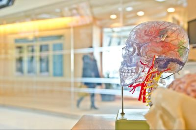 Both the left and right half of the brain are involved in creativity.