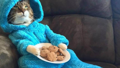 A photo of pajama-wearing cat featured in the email from the US embassy in Australia.