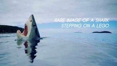 A rare picture of a shark stepping on a Lego