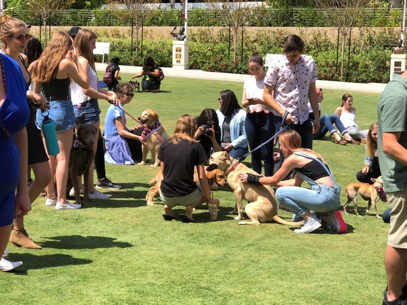 Neighbors and students mingle at 2nd annual Chapman Dog Day