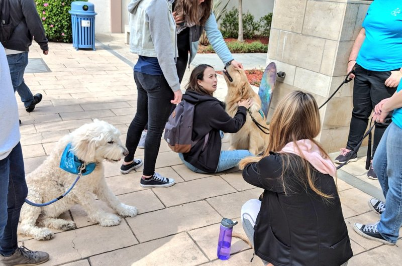 Showing our law students some love today with the help of some furry friends. https://t.co/wLjT7XQnM2