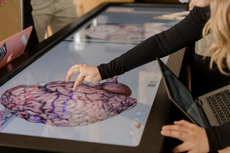 Crean College Introduces Interdisciplinary Neuroscience Minor