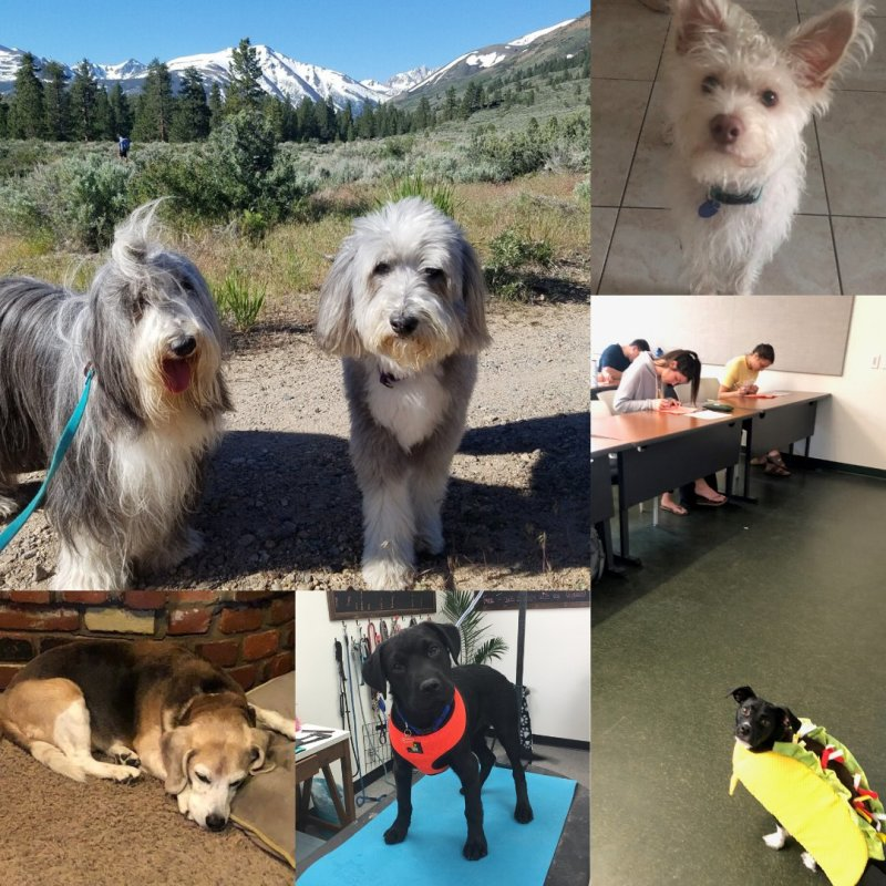 It's #NationalPuppyDay and we are here for it! Enjoy some of the SoC pups that bring joy to our lives. https://t.co/mpoMpeu3dH