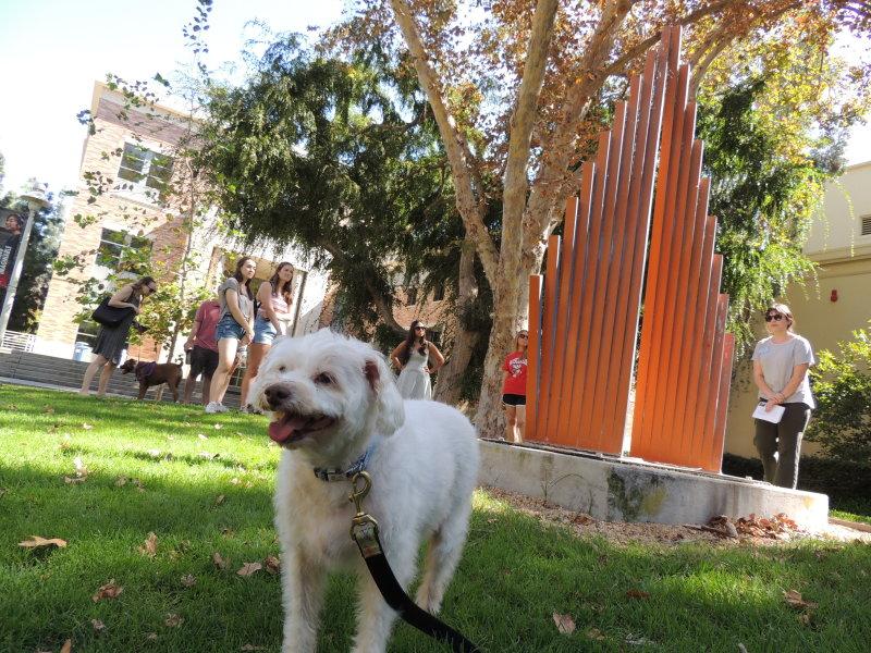 Virtual Art/Dog Walk