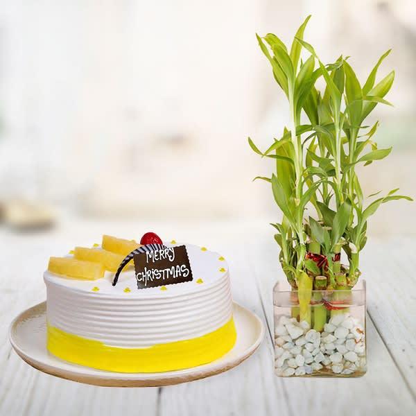 Pineapple & Plant