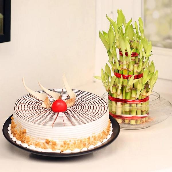Cake N Plant