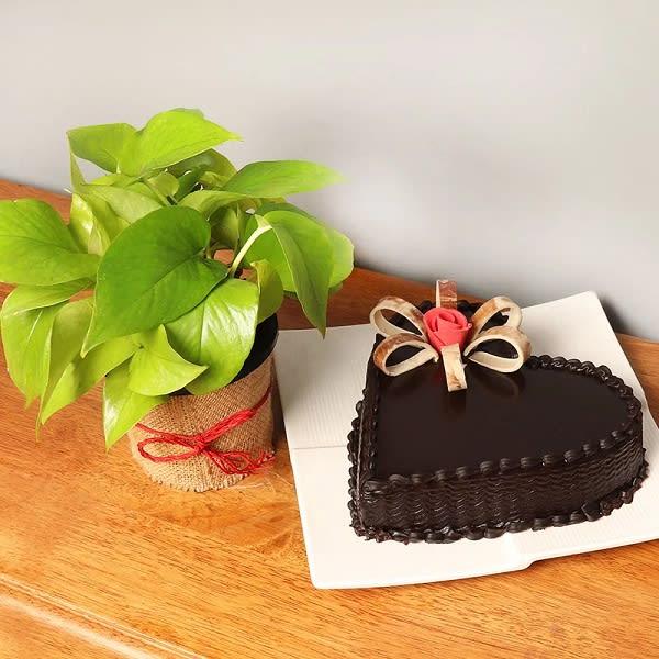 Cake and Money Plant