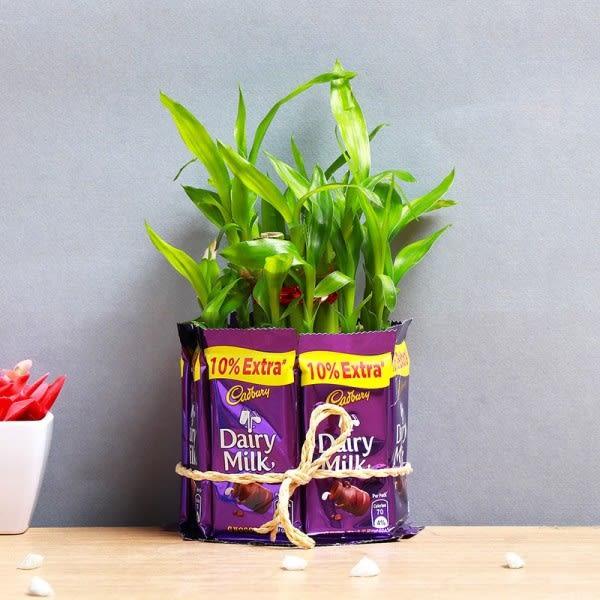 Plants With Chocolates