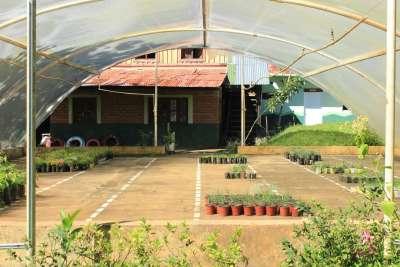 Tunel de aclimatisamiento de plantas aromáticas.