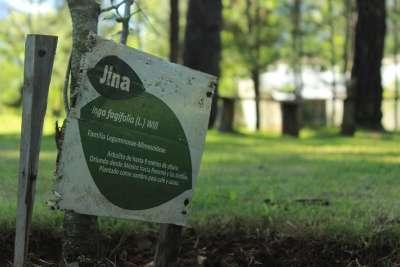 Muchas plantas en el Instituto tienen una describción de su taxonomía como la de esta Jina.