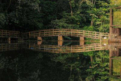 Parte de la diversidad del Instituto es este parque acuatico con su variedad de especies de flora y fauna.