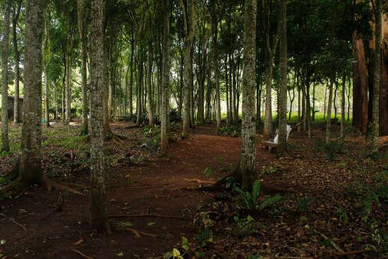 Parque de la Caoba