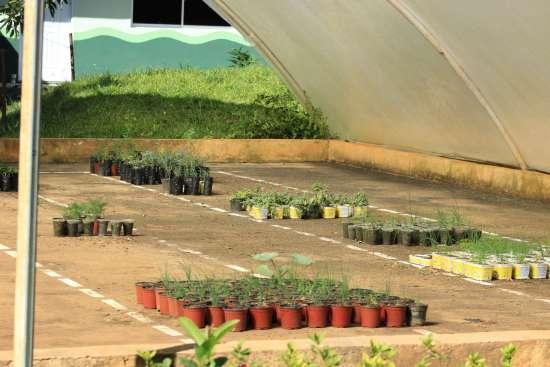 Plantas jovenes en el invernadero
