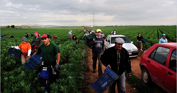Жители Мариналеды на сельскохозяйственных работах