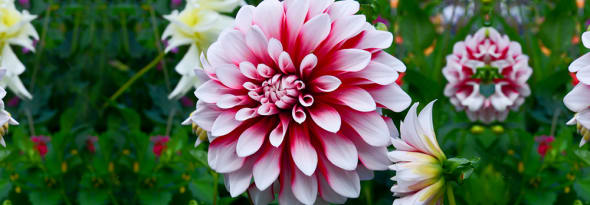 A Guide to Indian Blooms- Flower Types and Uses