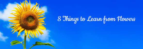 8 Things to Learn from Flowers