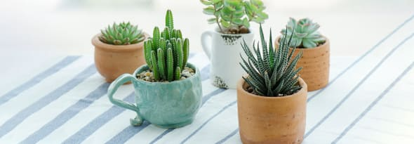 Say Hello to Succulents- Your Pretty, Long Lasting and Low-Maintenance Nature Friends