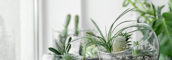 6 Trendy and Stylish Ways to Display your Succulents