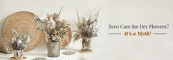 Zero Care for Dry Flowers - Its a Myth
