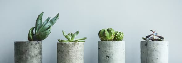 Types of Succulents that are Perfect for Your Garden
